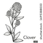 vector illustration. clover... | Shutterstock .eps vector #1695388033