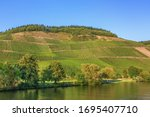Vineyards On The Banks Of The...