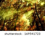 Shafts Of Light Through Forest...