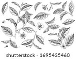 hand drawn set of tea plant... | Shutterstock .eps vector #1695435460