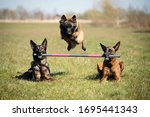 Three Dogs Showing A Fantastic...