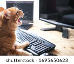 Cat Angry About Working From...