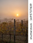 Small photo of A foggy sunrise view in a vineyard near lake neusiedl in Burgenland in Austria during autum.