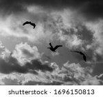 Flying Flock Of Pelicans In Th...