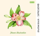 vector watercolor flower... | Shutterstock .eps vector #169616048