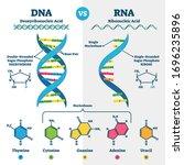 dna vs rna vector illustration. ... | Shutterstock .eps vector #1696235896