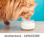 Furry Red Cat Drinking Milk On...