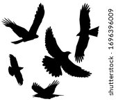 A Black Kite And Rook Or Crow...