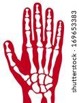 Human Skeleton  Bones  Hand