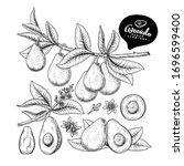 vector sketch avocado... | Shutterstock .eps vector #1696599400