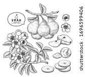 vector sketch pear decorative... | Shutterstock .eps vector #1696599406
