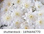 A Bouquet Of Chrysanthemums. ...