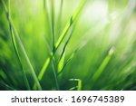 Closeup Of Fresh Green Grass...