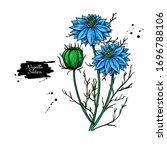 nigella sativa vector drawing.... | Shutterstock .eps vector #1696788106