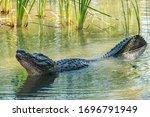 Closeup On Majestic Everglades...