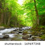 mountain river in the wood | Shutterstock . vector #169697348