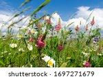 Beautiful Flower Meadow In...