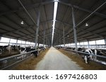 Large Cowshed On The Farm. The...