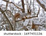 An Agile Squirrel Balancing On...