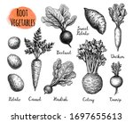 root vegetables set. ink sketch ... | Shutterstock .eps vector #1697655613
