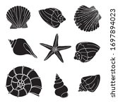Shells Collection. Vector Set...