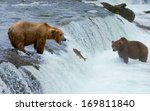 a grizzly bear hunting salmon... | Shutterstock . vector #169811840