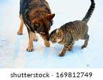 Stock photo cat and big dog playing in the snow 169812749