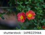 Small photo of Two cally flowers in the nature background, boken