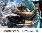 Living Carps At Water Tank ...