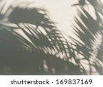 Palm Leaf Shadows On A White...