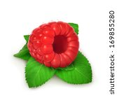 raspberries and mint  detailed... | Shutterstock .eps vector #169855280