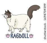cute cartoon ragdoll cat with...   Shutterstock .eps vector #1698709399