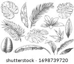 hand drawn tropical leaves.... | Shutterstock .eps vector #1698739720