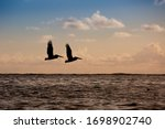 Silhouette Of Two Flying...