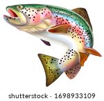 Rainbow Trout Fish Illustration.  Isolated on white background.