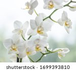 Macro photo of white orchid....