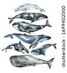 Watercolor Whale Illustration...