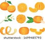 orange mandarin fruit unpeeled... | Shutterstock .eps vector #1699485793