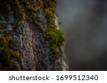 Texture Of Green Moss On The...