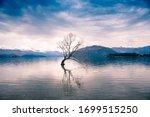 The Famed 'lone Tree Of Wanaka' ...