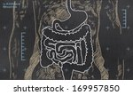 x ray of intestines sketched on ... | Shutterstock . vector #169957850