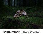 An Animal Skull Illuminated By...