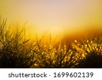 Nature Background At Sunset An...