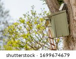 Adult Blue Tit Bird Seen With...