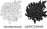 Hand Drawn Chrysanthemum Flower ...
