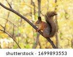Squirrel In Autumn Park Scene....