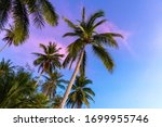 Tropical Palm Trees Against A...