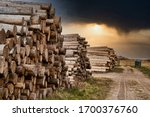 Rows of piled of logs , waiting to be processed, at a local rural lumber mill, made into lumber for construction.