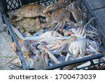 Crabs And Blue Crabs Fresh...