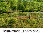 Wetland Habitat On An April...